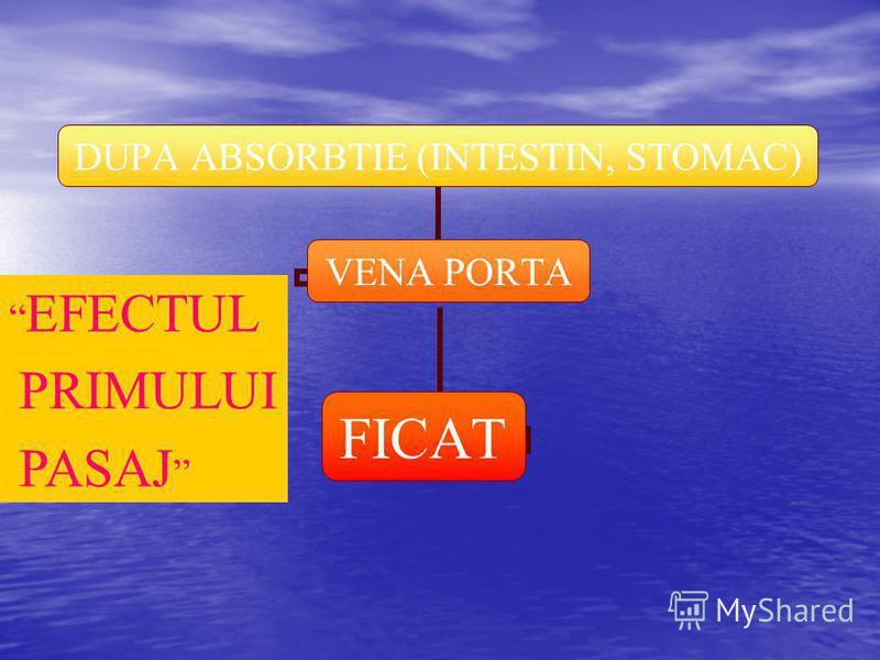 DUPA ABSORBTIE (INTESTIN, STOMAC) VENA PORTA FICAT EFECTUL PRIMULUI PASAJ