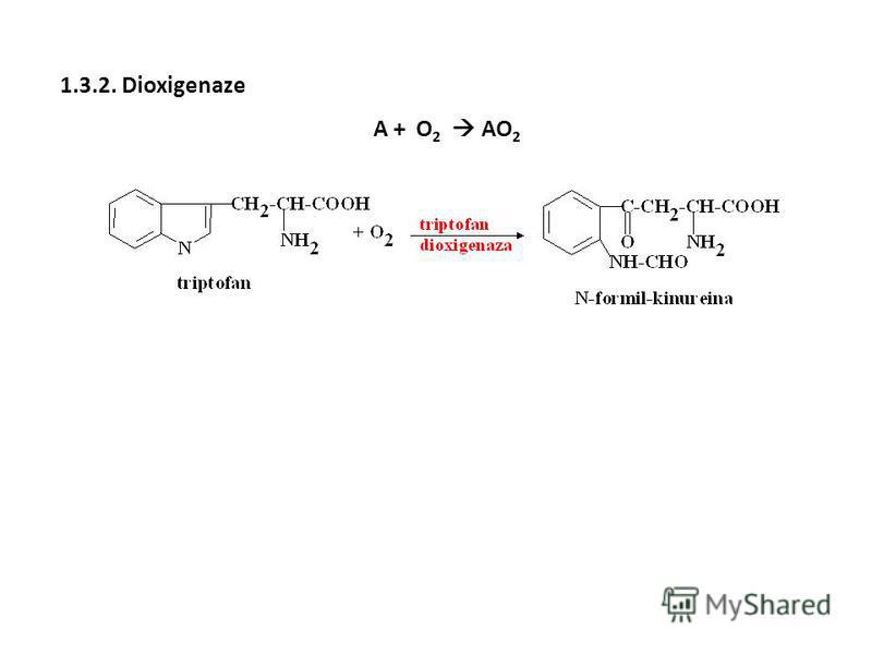 1.3.2. Dioxigenaze A + O 2 AO 2