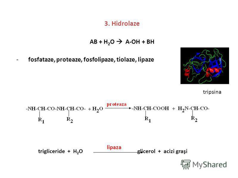3. Hidrolaze AB + H 2 O A-OH + BH -fosfataze, proteaze, fosfolipaze, tiolaze, lipaze tripsina trigliceride + H 2 O glicerol + acizi graşi lipaza