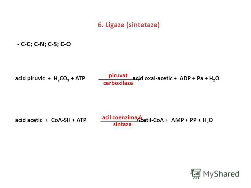 6. Ligaze (sintetaze) - C-C; C-N; C-S; C-O acid piruvic + H 2 CO 3 + ATP acid oxal-acetic + ADP + Pa + H 2 O piruvat carboxilaza acid acetic + CoA-SH + ATP Acetil-CoA + AMP + PP + H 2 O acil coenzima A sintaza