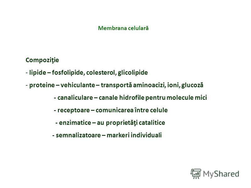 Compoziţie - lipide – fosfolipide, colesterol, glicolipide - proteine – vehiculante – transportă aminoacizi, ioni, glucoză - canaliculare – canale hidrofile pentru molecule mici - receptoare – comunicarea între celule - enzimatice – au proprietăţi ca