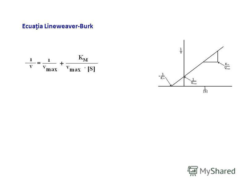 Ecuaţia Lineweaver-Burk