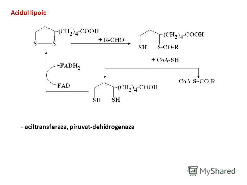Acidul lipoic - aciltransferaza, piruvat-dehidrogenaza