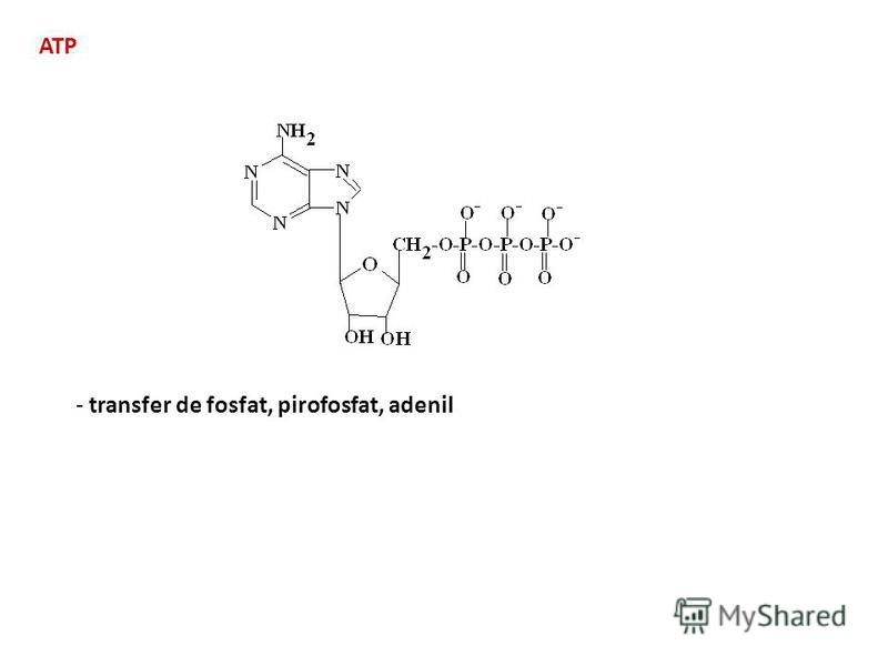 ATP - transfer de fosfat, pirofosfat, adenil