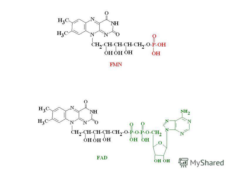 Efecte biologice - coenzimă – FMN, FAD