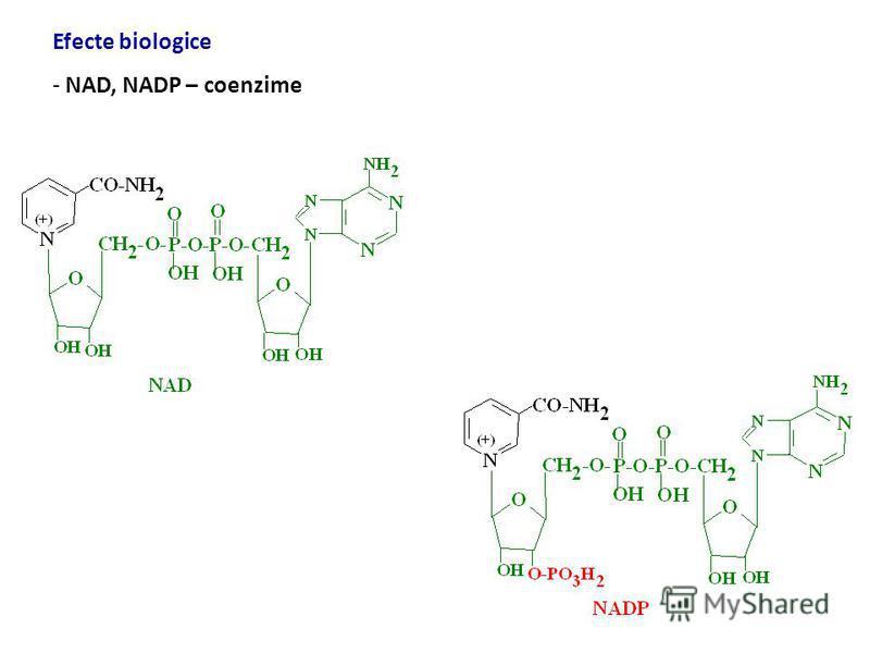 Vitamina B 3 (niacina, PP) - 1873 – Hugo Weidel - surse - exogenă - carne, germeni de grâu, lactate, ton, ouă, avocado, vegetale frunze, nuci - endogenă – triptofan kinurenină niacină - necesar – copii – 2-12 mg/zi, adulţi 14-16 mg/zi - 1000-2000 mg/