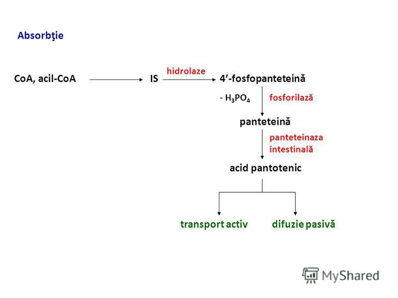 Vitamina B 5 (acidul pantotenic) - D – activ biologic - surse - exogenă - carne, cereale integrale - endogenă – bacteriile intestinale - necesar – copii – 3-4 mg/zi, adulţi 5-6 mg/zi