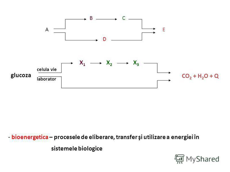 - sisteme biologice - reacţii dintr-o cale metabolică - celulă - cultură de celule - ţesut - organismul
