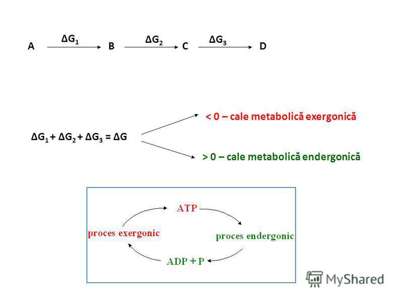 Variaţia energiei libere în reacţiile biochimice ΔG = ΔH – T · ΔS ΔG = ΔE – T · ΔS ΔG < 0 – reacţii exergonice ΔG > 0 – reacţii endergonice ΔG = 0 – echilibru