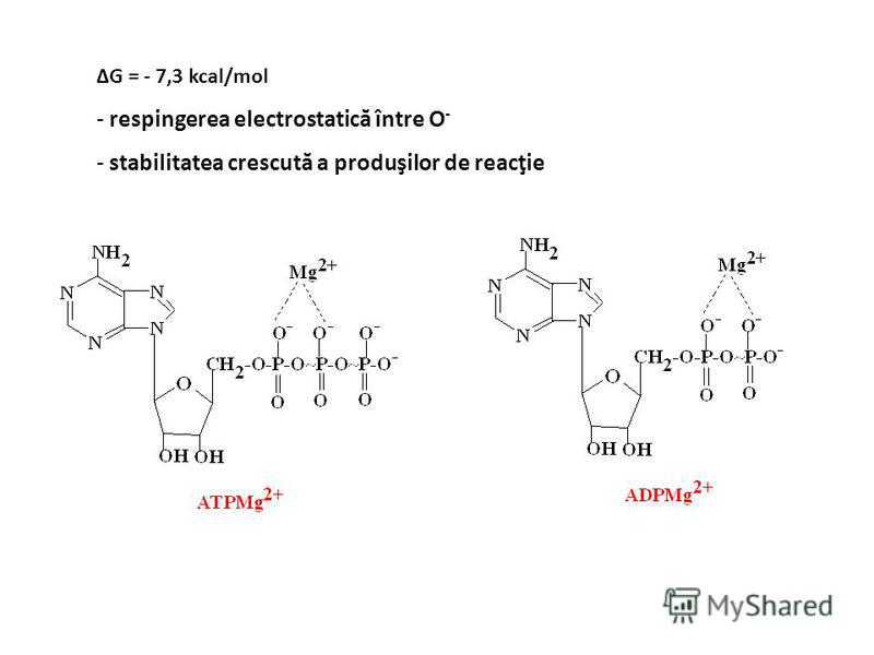 Compuşi macroergici ATP ADP + P AMP + PP ΔG = - 7,3 kcal/mol 2 P pirofosfataza ΔG = - 6,6 kcal/mol