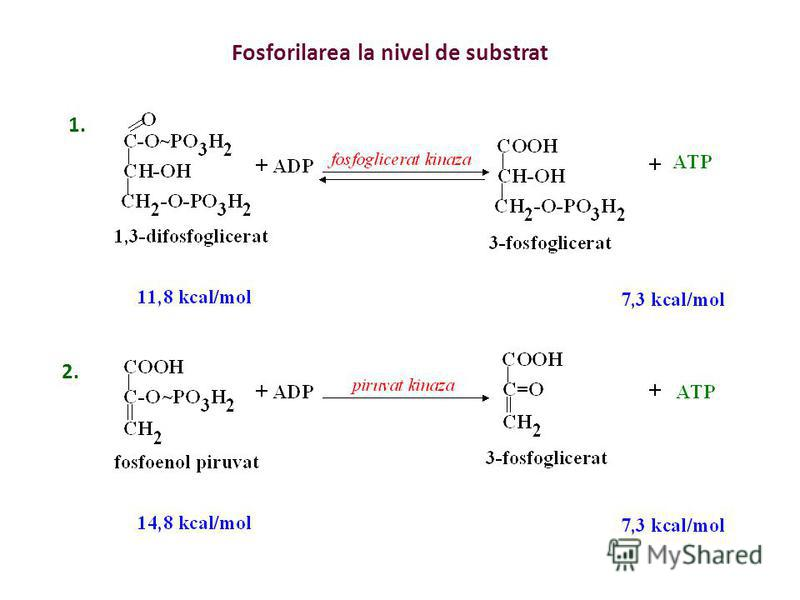 Căile de sinteză a ATP-ului in vivo - reacţii exergonice - aerobe – 38 moli ATP/mol glucoză - anaerobe – 2 moli ATP/mol glucoză - căi de sinteză - fosforilarea la nivel de substrat - lanţul respirator cuplat cu fosforilarea oxidativă