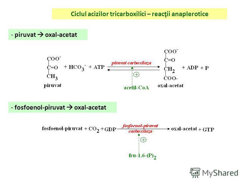 Ciclul acizilor tricarboxilici – cale amfibolică - echivalenţi reducători – NADH, FADH 2 - α-ceto-glutarat r. transaminare glutamat aa, purine ac. nucleici - citrat acetil-CoA AG citrat acetil-CoA + oxal-acetat - succinil-CoA corpi cetonici DAL Hb, m