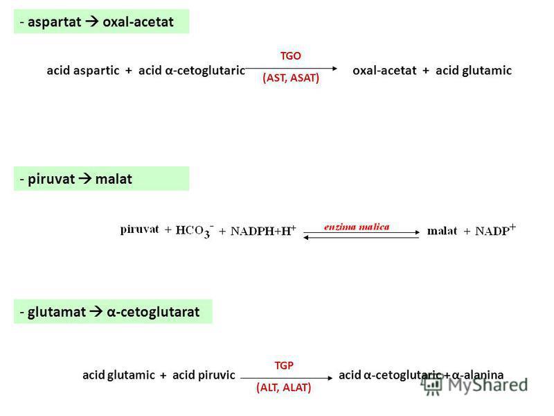 Ciclul acizilor tricarboxilici – reacţii anaplerotice - piruvat oxal-acetat - fosfoenol-piruvat oxal-acetat