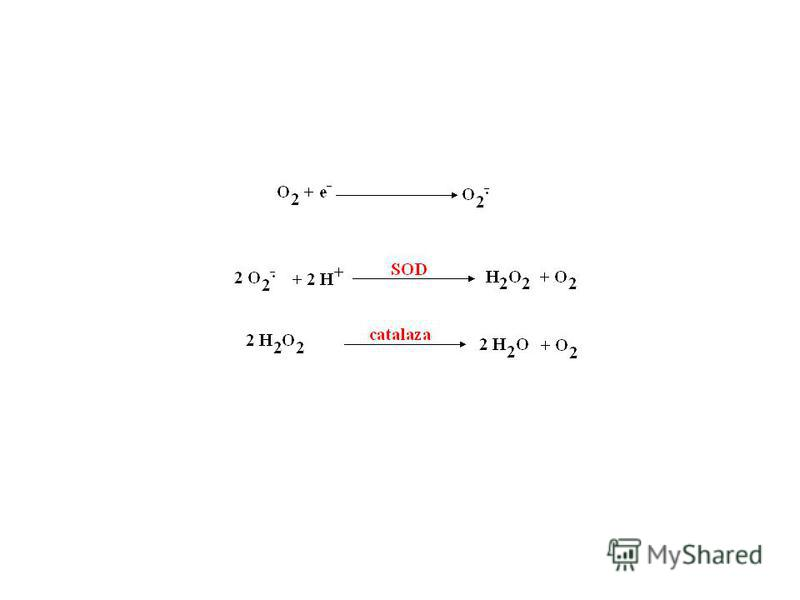 LANŢUL RESPIRATOR - oxidarea NADH, FADH 2, transportul e -, sinteza H 2 O Structură - NADH-dehidrogenaze - flavin dehidrogenaze – FP N, FP S - coenzima Q - proteine cu Fe şi S - Fe 2 S 2, Fe 3 S 4, Fe 4 S 4 Fe 3+ + e - ------- Fe 2+ - citocromi - a,