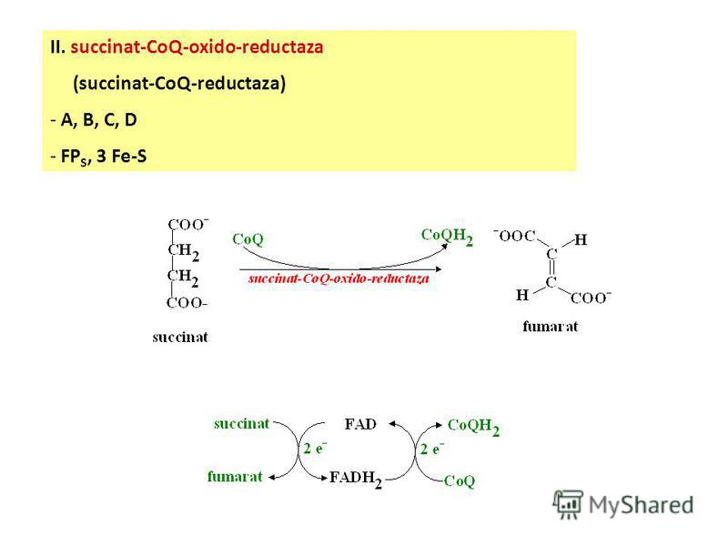 I. NADH-CoQ-oxido-reductaza (NADH-dehidrogenaza) - FP N, 4 Fe-S