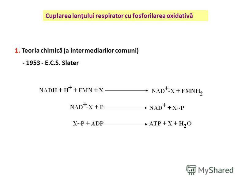 Cuplarea lanţului respirator cu fosforilarea oxidativă 1. Teoria chimică (a intermediarilor comuni) - 1953 - E.C.S. Slater