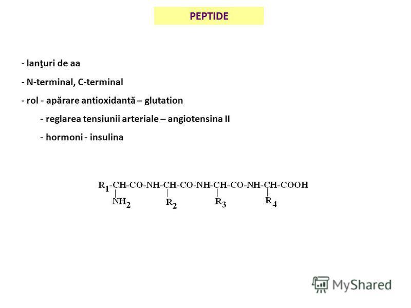 PEPTIDE - lanţuri de aa - N-terminal, C-terminal - rol - apărare antioxidantă – glutation - reglarea tensiunii arteriale – angiotensina II - hormoni - insulina