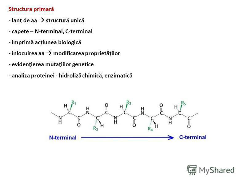 Structura primară - lanţ de aa structură unică - capete – N-terminal, C-terminal - imprimă acţiunea biologică - înlocuirea aa modificarea proprietăţilor - evidenţierea mutaţiilor genetice - analiza proteinei - hidroliză chimică, enzimatică