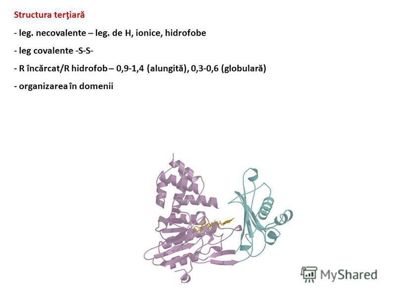 Structura terţiară - leg. necovalente – leg. de H, ionice, hidrofobe - leg covalente -S-S- - R încărcat/R hidrofob – 0,9-1,4 (alungită), 0,3-0,6 (globulară) - organizarea în domenii