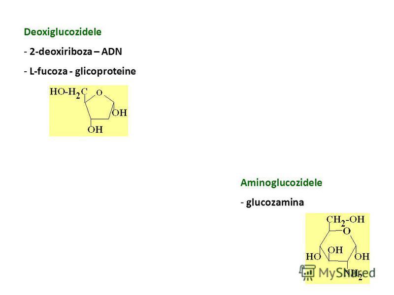 Deoxiglucozidele - 2-deoxiriboza – ADN - L-fucoza - glicoproteine Aminoglucozidele - glucozamina