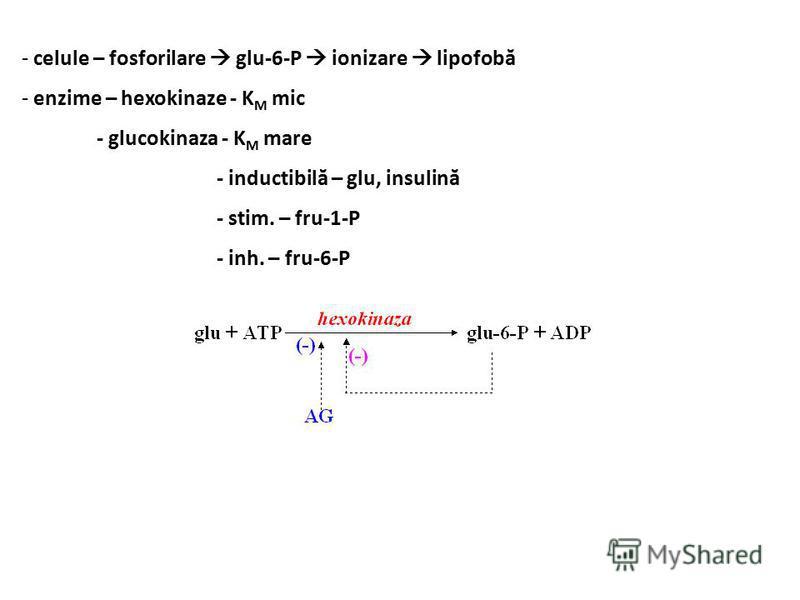 - celule – fosforilare glu-6-P ionizare lipofobă - enzime – hexokinaze - K M mic - glucokinaza - K M mare - inductibilă – glu, insulină - stim. – fru-1-P - inh. – fru-6-P