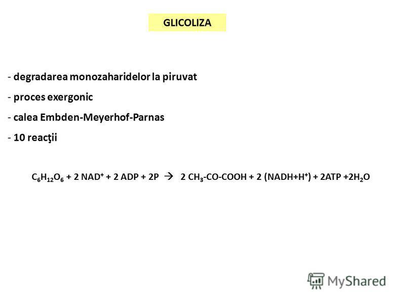 GLICOLIZA - degradarea monozaharidelor la piruvat - proces exergonic - calea Embden-Meyerhof-Parnas - 10 reacţii C 6 H 12 O 6 + 2 NAD + + 2 ADP + 2P 2 CH 3 -CO-COOH + 2 (NADH+H + ) + 2ATP +2H 2 O