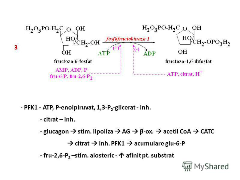 3 - PFK1 - ATP, P-enolpiruvat, 1,3-P 2 -glicerat - inh. - citrat – inh. - glucagon stim. lipoliza AG β-ox. acetil CoA CATC citrat inh. PFK1 acumulare glu-6-P - fru-2,6-P 2 –stim. alosteric - afinit pt. substrat