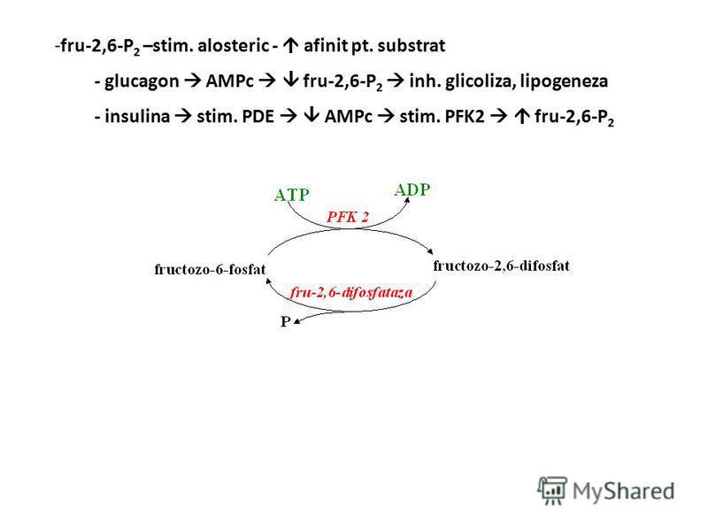 - glucagon AMPc fru-2,6-P 2 inh. glicoliza, lipogeneza - insulina stim. PDE AMPc stim. PFK2 fru-2,6-P 2