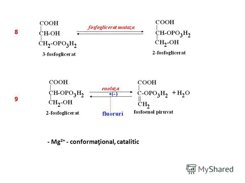 8 - Mg 2+ - conformaţional, catalitic 9