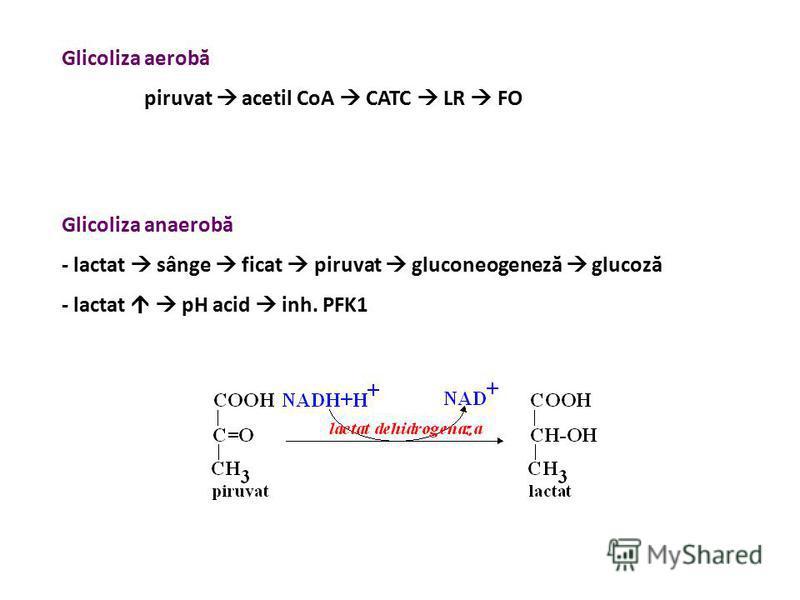 Glicoliza aerobă piruvat acetil CoA CATC LR FO Glicoliza anaerobă - lactat sânge ficat piruvat gluconeogeneză glucoză - lactat pH acid inh. PFK1