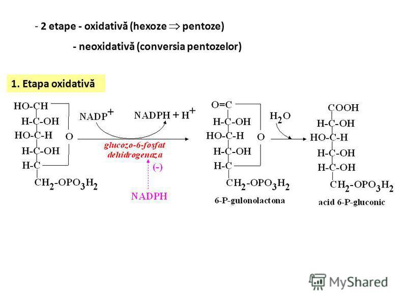 - 2 etape - oxidativă (hexoze pentoze) - neoxidativă (conversia pentozelor) 1. Etapa oxidativă