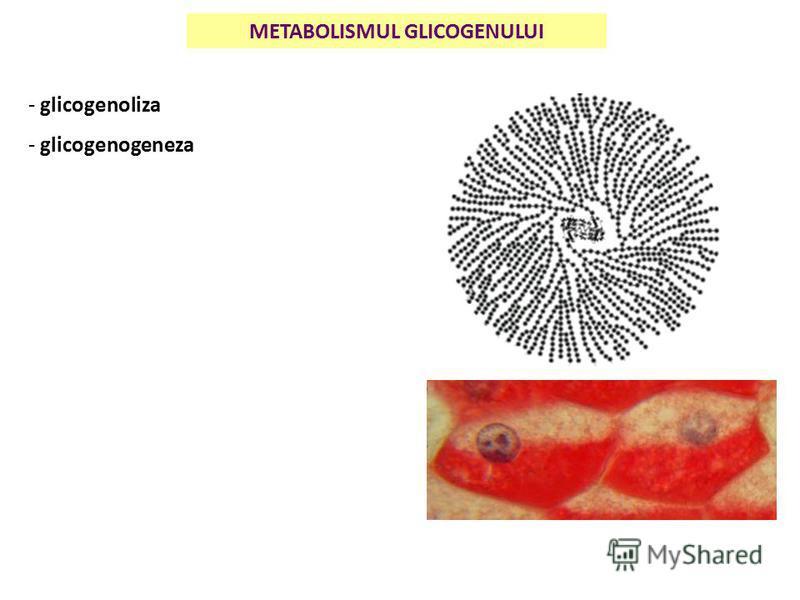 METABOLISMUL GLICOGENULUI - glicogenoliza - glicogenogeneza