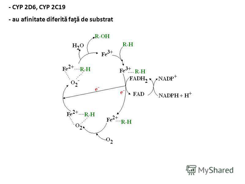 - CYP 2D6, CYP 2C19 - au afinitate diferită faţă de substrat