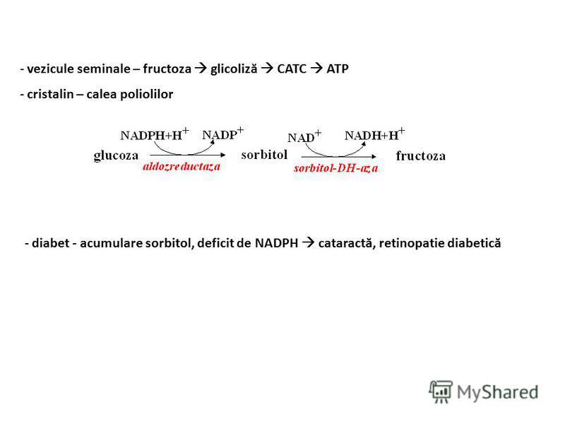 - vezicule seminale – fructoza glicoliză CATC ATP - cristalin – calea poliolilor - diabet - acumulare sorbitol, deficit de NADPH cataractă, retinopatie diabetică