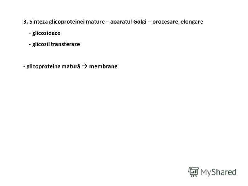 3. Sinteza glicoproteinei mature – aparatul Golgi – procesare, elongare - glicozidaze - glicozil transferaze - glicoproteina matură membrane