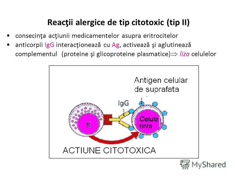 Reacţii alergice de tip citotoxic (tip II) consecinţa acţiunii medicamentelor asupra eritrocitelor anticorpii IgG interacţionează cu Ag, activează şi aglutinează complementul (proteine şi glicoproteine plasmatice) liza celulelor