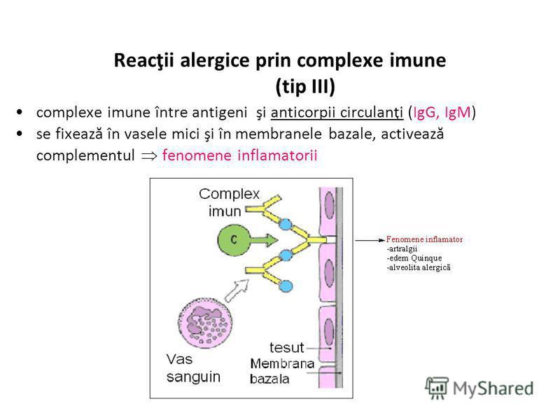 Reacţii alergice prin complexe imune (tip III) complexe imune între antigeni şi anticorpii circulanţi (IgG, IgM) se fixează în vasele mici şi în membranele bazale, activează complementul fenomene inflamatorii