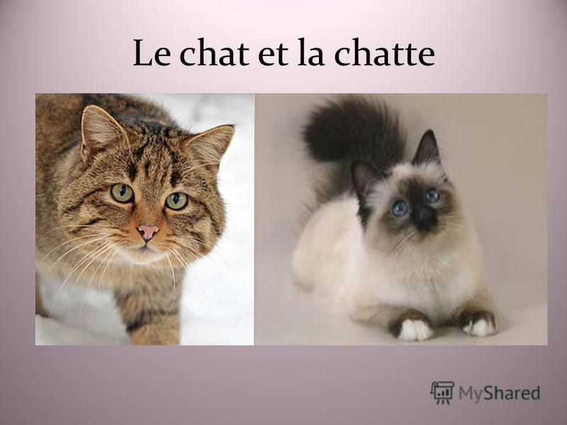 Le chat et la chatte