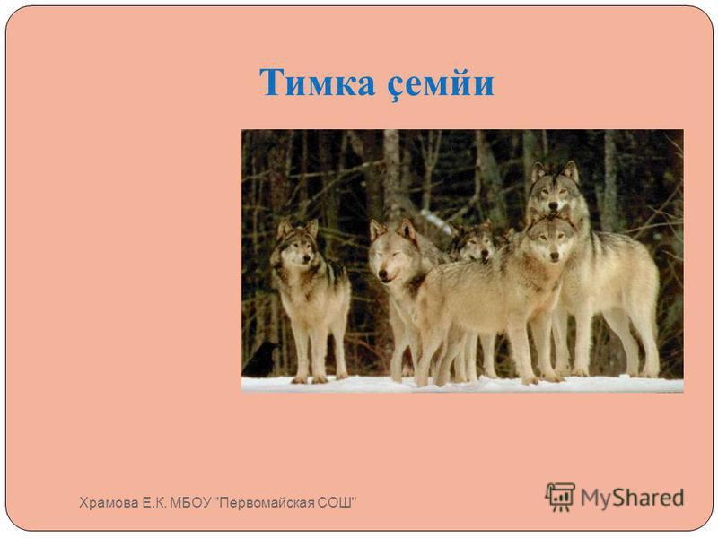 Тимка çемйи Храмова Е.К. МБОУ Первомайская СОШ
