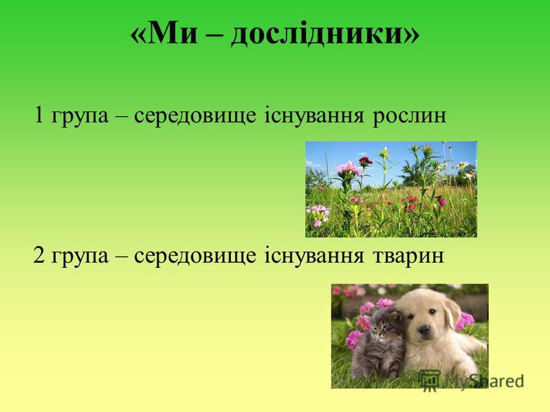 «Ми – дослідники» 1 група – середовище існування рослин 2 група – середовище існування тварин