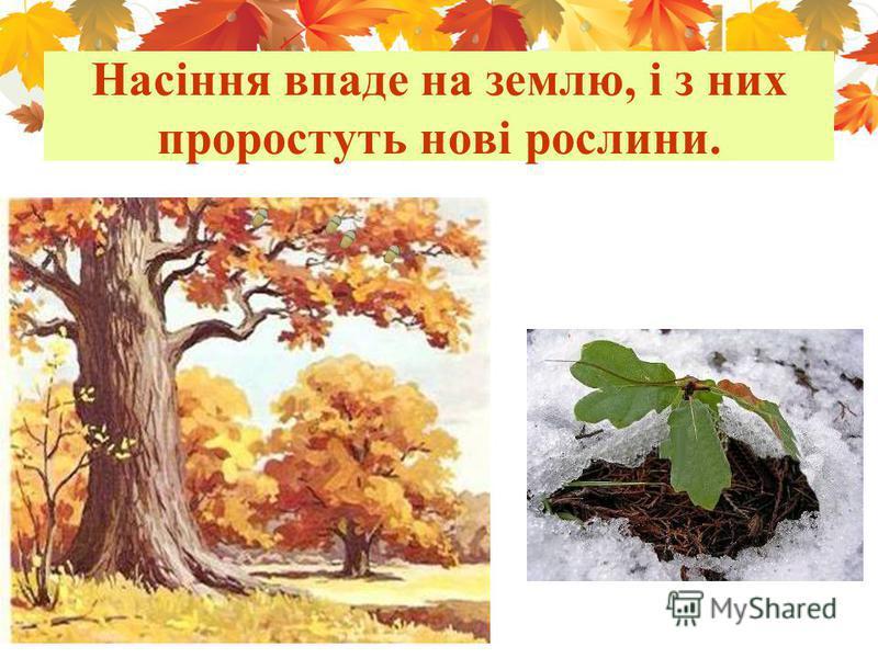 Насіння впаде на землю, і з них проростуть нові рослини.