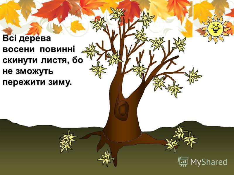 Всі дерева восени повинні скинути листя, бо не зможуть пережити зиму.