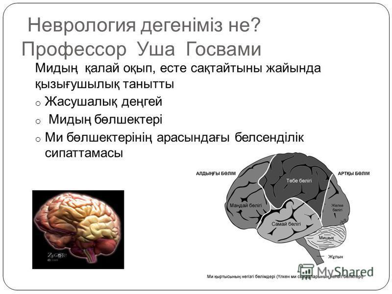 Неврология дегеніміз не? Профессор Уша Госвами Мидың қалай оқып, есте сақтайтыны жайында қызығушылық танытты o Жасушалық деңгей o Мидың бөлшектері o Ми бөлшектерінің арасындағы белсенділік сипаттамасы