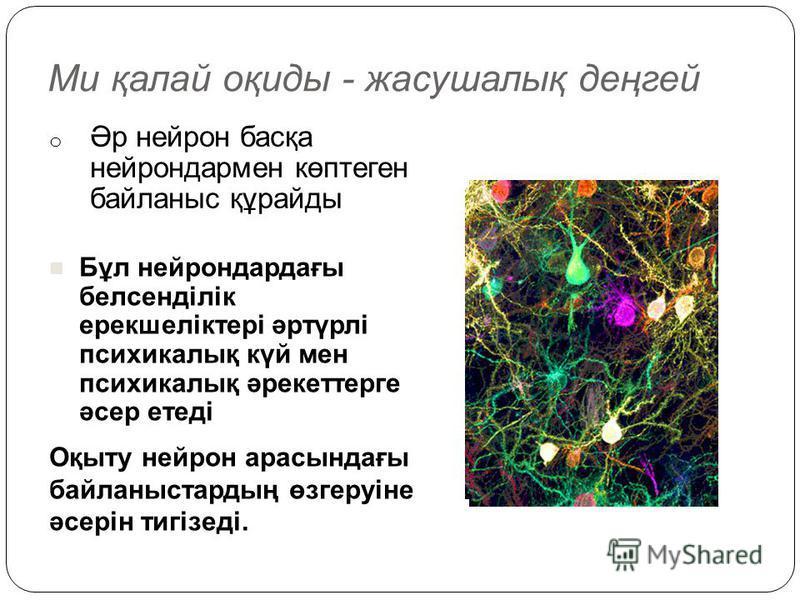 Ми қалай оқиды - жасушалық деңгей o Әр нейрон басқа нейрондармен көптеген байланыс құрайды Оқыту нейрон арасындағы байланыстардың өзгеруіне әсерін тигізеді. Бұл нейрондардағы белсенділік ерекшеліктері әртүрлі психикалық күй мен психикалық әрекеттерге