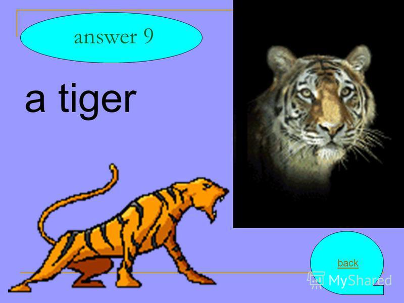 a tiger answer 9 back