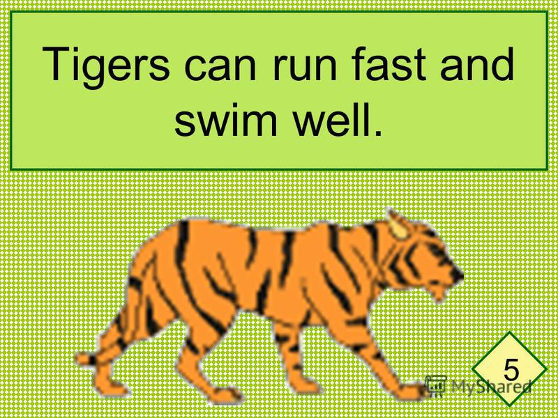 Tigers can run fast and swim well. 5
