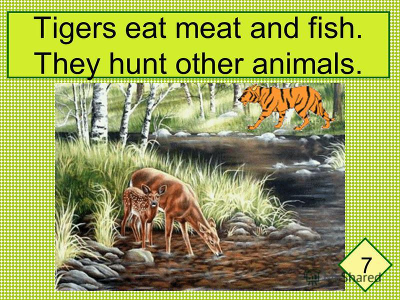 Tigers eat meat and fish. They hunt other animals. 7