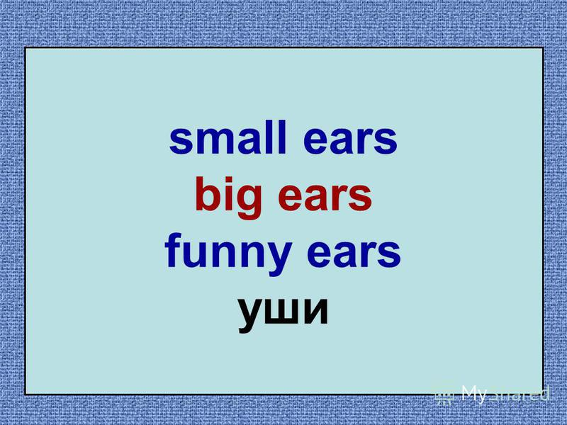 small ears big ears funny ears уши
