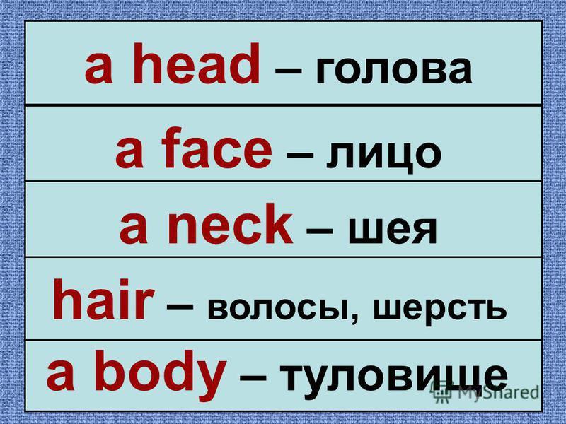 a head – голова a face – лицо a neck – шея a body – туловище hair – волосы, шерсть