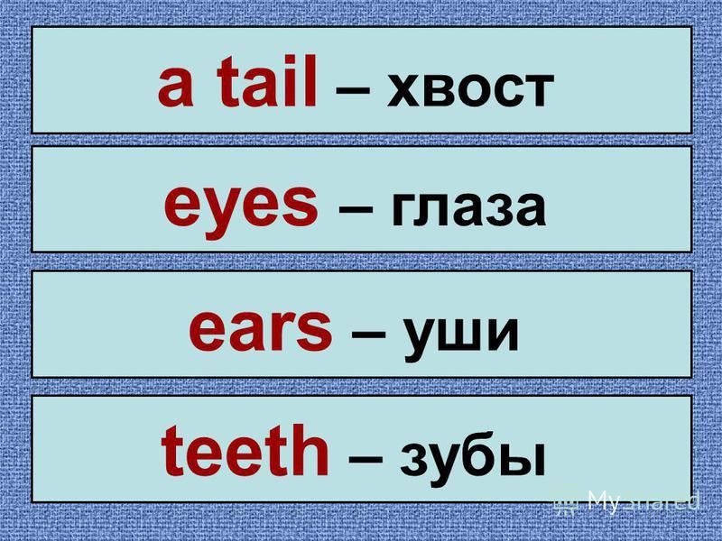 a tail – хвост eyes – глаза ears – уши teeth – зубы